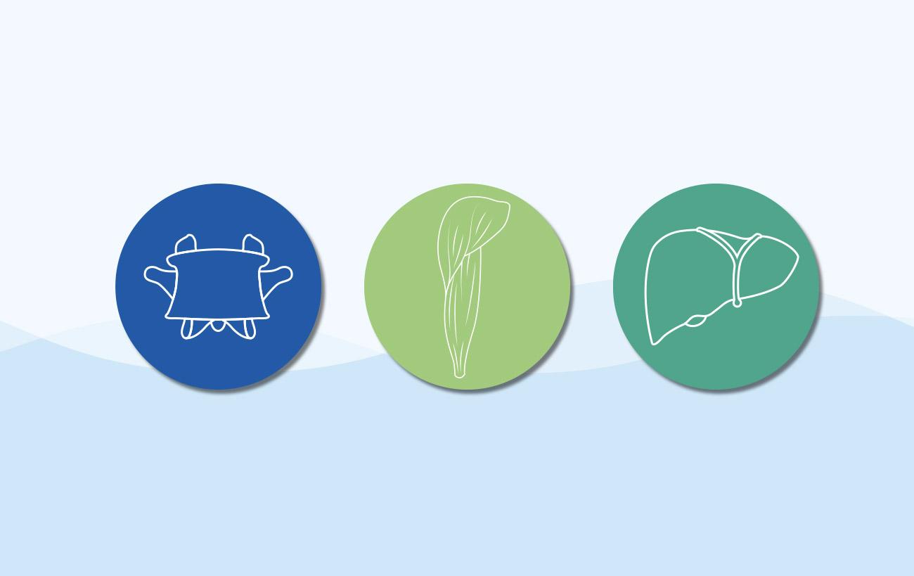 Individualisierte Icons für Osteopathie Schumacher