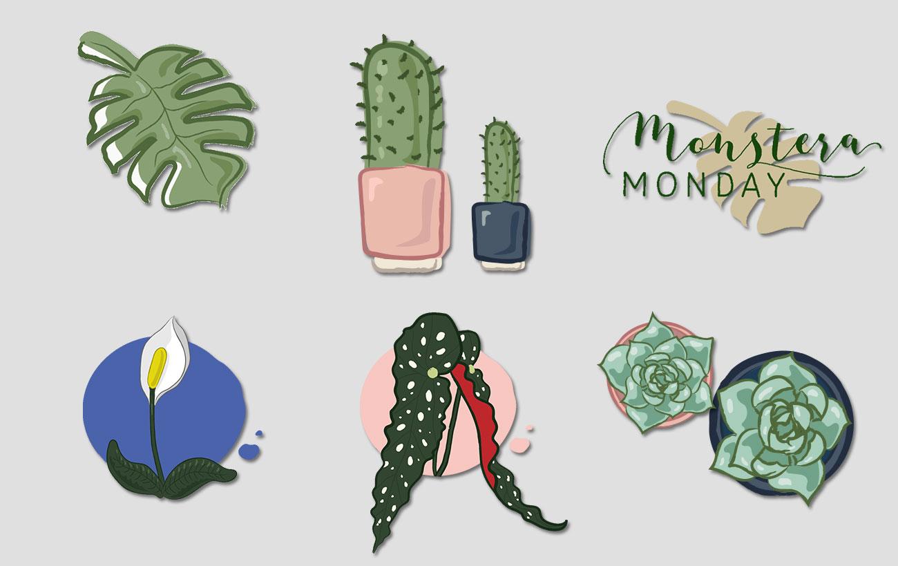 Illustrationen von Pflanzen für den Webshop von dasherzallerliebste