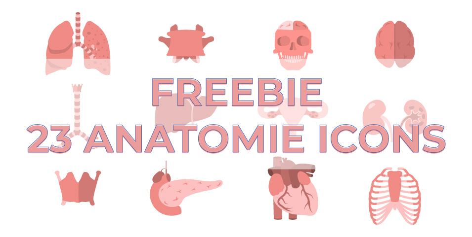 23 gratis Icons zum Thema Anatomie