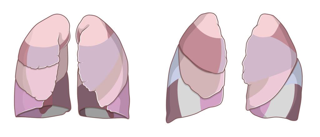 Medizinische Illustration der Lungensegmente